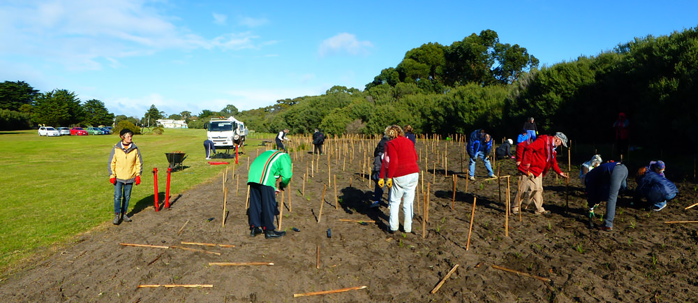 Planting_at_St_Leonards